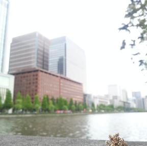 도쿄 시청 근처에서 뻘짓