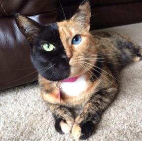 두개의 얼굴을 가진 고양이