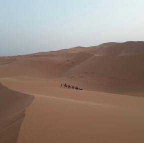 사하라사막