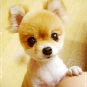 강아지 귀엽네요~