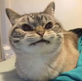 최애 고양이 짤