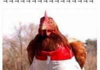 닭이 작은옷을입으면?