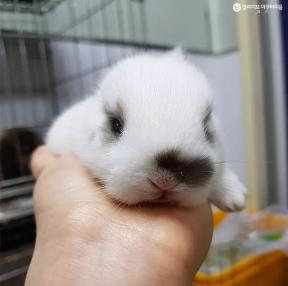 토끼가 이렇게 귀엽다니